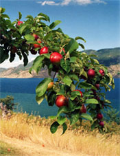 Apples ~N~ Wine B&B, British Columbia