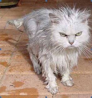 The cat lloks rather bedraggled at Amber House Bed and Breakfast in the Nelson-Tasman region of the South 